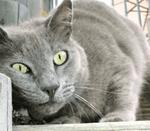 Territorial_Marking_Behavior_in_Cats